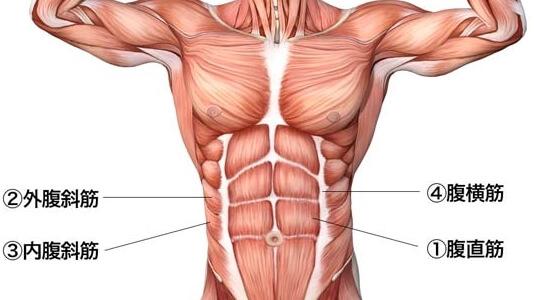 実は腹筋はもう割れている!? 割れた腹筋を見せる4つの方法 ...